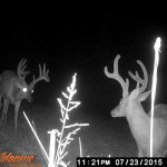 Trail Cam Deer Photo