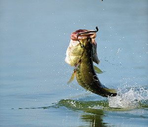 Big ed's guide service • lake of the ozarks bass fishing guide.